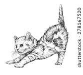 kitten playing. hand drawn...   Shutterstock .eps vector #278167520