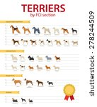 Dog Breeds Terriers By Fco...