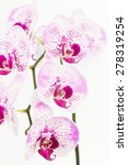 purple and white moth orchids... | Shutterstock . vector #278319254