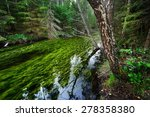 forest spring at the begining... | Shutterstock . vector #278358380