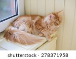 red marble maine coon cat | Shutterstock . vector #278371958