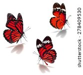 three orange monarch butterfly... | Shutterstock . vector #278409530