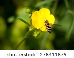 Bee On A Buttercup Flower ...