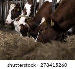 dutch cows | Shutterstock . vector #278415260