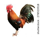 Beautiful Rooster Isolated On...