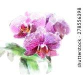 watercolor illustration of... | Shutterstock .eps vector #278556398