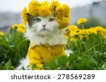 Stock photo cat sitting on the grass sunny summer day 278569289