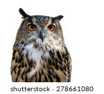 Stock photo great horned owl bubo virginianus subarcticus in front of white background 278661080