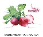 radish   watercolor food... | Shutterstock . vector #278727764