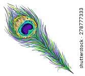 Vector Peacock Feather...