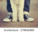 Stock photo young man with his dog 278836880