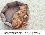 Stock photo a ginger cat sleeps in his soft cozy bed on a floor carpet 278842919