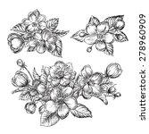 beautiful flowers   vector... | Shutterstock .eps vector #278960909
