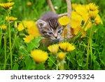 Stock photo cute little kitten sitting in a basket on the flower meadow 279095324