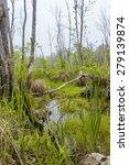 foggy overgrown swamp or marsh... | Shutterstock . vector #279139874
