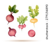 set of watercolor vegetables... | Shutterstock .eps vector #279156890