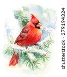 Watercolor Bird Cardinal Winte...