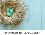A Robin's Nest With Three Eggs...