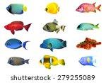 Fish Species   Index Of Red Sea ...