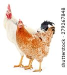 hen and rooster isolated on... | Shutterstock . vector #279267848
