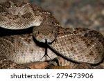 Mojave Rattlesnake  Crotalus...
