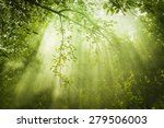 rays of sunlight and green... | Shutterstock . vector #279506003