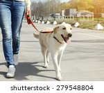 owner and labrador retriever... | Shutterstock . vector #279548804