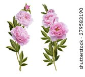 bouquets of pink peonies on a... | Shutterstock .eps vector #279583190