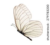 Stock photo white butterfly isolated on white background 279783200