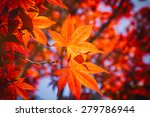 Seasonal Colorful Plant In...