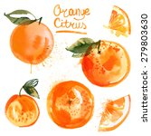 set of oranges painted with... | Shutterstock .eps vector #279803630