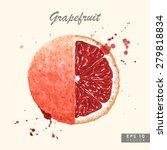 colorful watercolor grapefruit   Shutterstock .eps vector #279818834