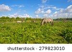 herd of horses in nature under... | Shutterstock . vector #279823010