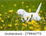 Stock photo adorable white kitten outdoors 279846773