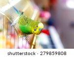 Budgerigar On The Birdcage....