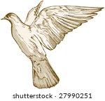 Pigeon   Hand Draw Illustration ...