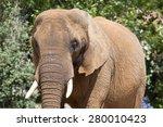 a head shot of an african... | Shutterstock . vector #280010423