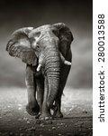 african elephant  loxodonta... | Shutterstock . vector #280013588