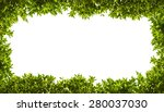 banyan green leaves isolated on ... | Shutterstock . vector #280037030