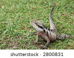 detailed water dragon lizard | Shutterstock . vector #2800831