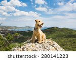 Stock photo happy dog breed lakeland terrier is sitting on a large rock on a background of mountains sea and 280141223