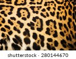 Close Up Leopard Spot Pattern...