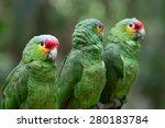 parrot bird sitting on the perch   Shutterstock . vector #280183784