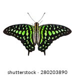 Butterfly  Graphium Agamemnon ...
