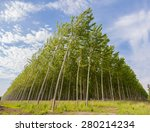 planting of poplars for the... | Shutterstock . vector #280214234