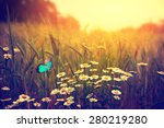 Butterfly Flying Spring Meadow...