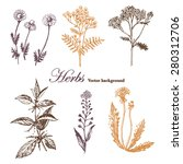 set of medicinal herbs.  vector ... | Shutterstock .eps vector #280312706