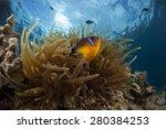anemone and anemonefish  sun...   Shutterstock . vector #280384253