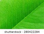 Green Leaf Macro.