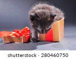 small black and white kitten... | Shutterstock . vector #280460750